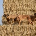 Summer in the fields 55 150x150 Galerie