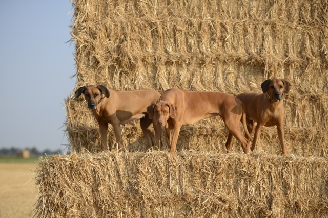 Summer in the fields 55 e1534084292203 Unsere Hunde