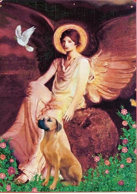 Engel mit RR 2 453x640 Wundervoll exzeptionell