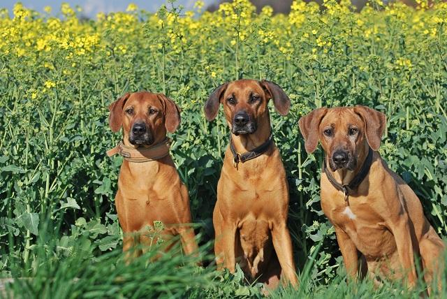 die 3 an Emma´s Geburtstag yellow green v/s redwheaten