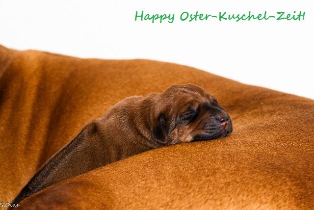Cadeau Tag 2 2 Happy Osterkuschel Zeit Happy Oster Kuschel Zeit