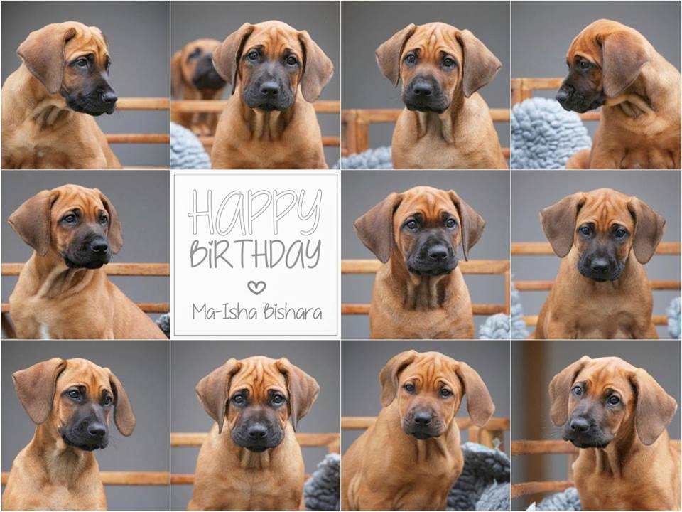 Happy Birthday Bishara Zum 4. Geburtstag...