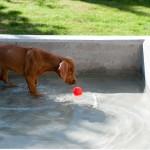 Hazel und das Wassergen 5 150x150 Und sie hat es doch...