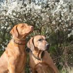 könnt ihr den Frühling rieschen  150x150 Wie riecht der Frühling?