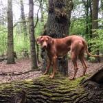 Hazel im Feenwald 2 150x150 Im Feen Wald