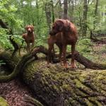 Hazel im Feenwald 3 150x150 Im Feen Wald
