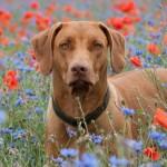in the poppy field  5 150x150 Laufen & Stehen ...das können wir...