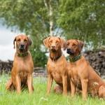Familienfoto in 3 Akten  2 150x150 We are family!