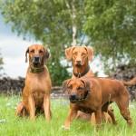 Familienfoto in 3 Akten  3 150x150 We are family!