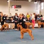 Bundessieger + Internationale Herbstshow Dortmund  3 150x150 Pferd & Hund Dortmund
