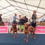 Bundessieger + Internationale Herbstshow Dortmund  5 150x150 Pferd & Hund Dortmund
