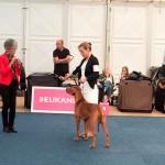 Bundessieger + Internationale Herbstshow Dortmund  8 150x150 Pferd & Hund Dortmund