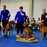 ab3dc567 8f5e 4156 a22a 54ae43299880 150x150  Nationale Dog Show Kassel