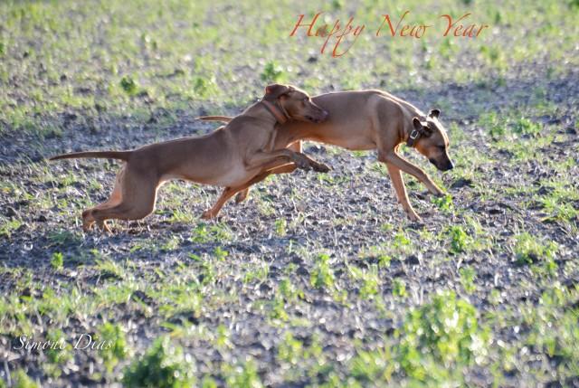 mit Spaß ins Neujahr ´18  e1514918611672 Mit großen Sprüngen ...
