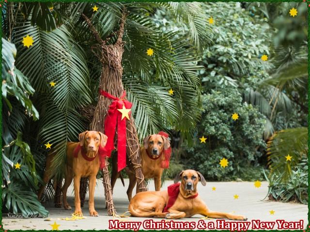 Merry Christmas 2018 Stars  e1545811232132