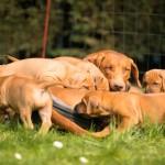 Tag 37... Mama + Puppies  150x150 Gartenimpressionen