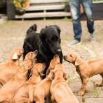 Jeffrey + Puppies  150x150 D Wurf: Ma isha Delightful