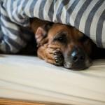 Zoe aufstehen, wir müssen gehen!