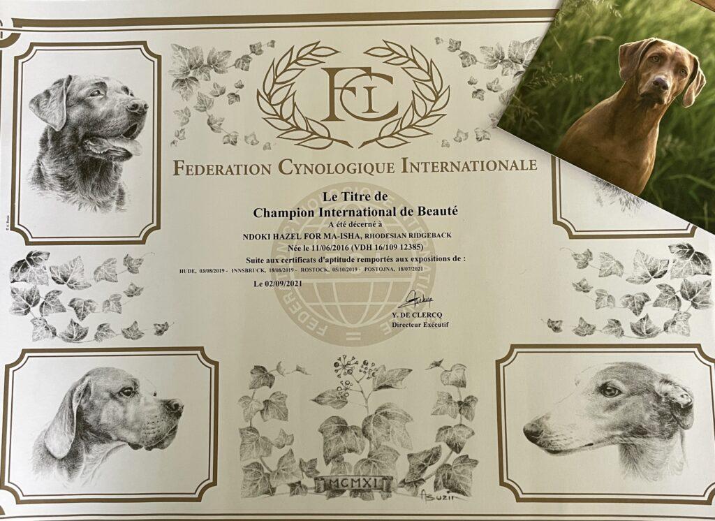 IMG 2241 1024x746 Internationaler FCI Schönheitschampion